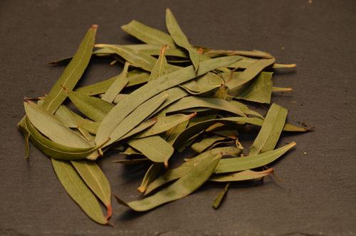 Tisane Eucalyptus - Le domaine des 1000 plantes
